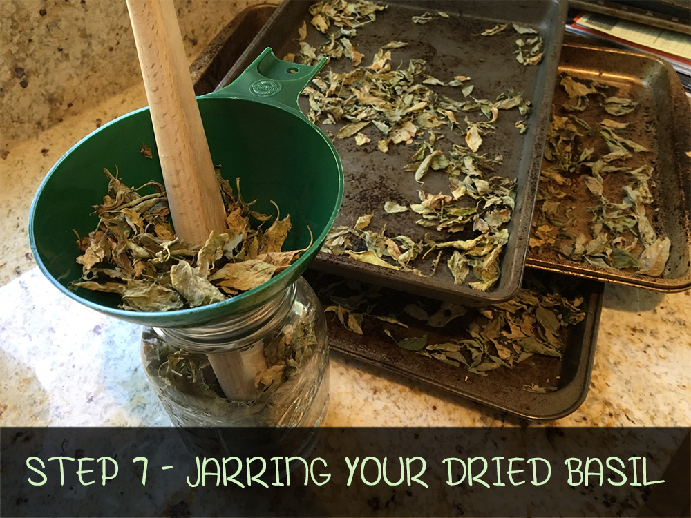 Step 7 - JARRING YOUR DRIED BASIL