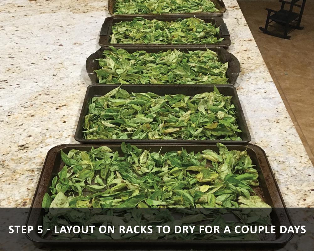 harvesting basil - Layout on Racks