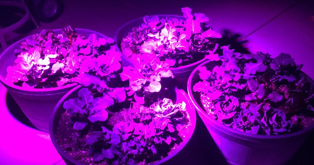 Winter Garden Sacramento LED Lights